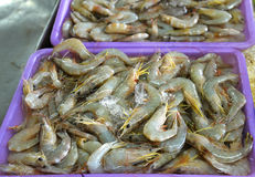 Shrimp on Market Royalty Free Stock Images