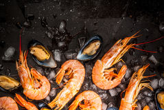 Shrimp and mussels on ice Royalty Free Stock Photos