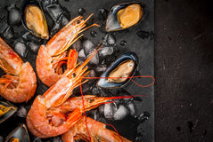 Shrimp and mussels on ice Stock Photos