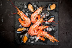 Shrimp and mussels on ice Stock Photography