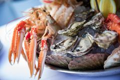 Shrimp, mussels and seafood served on the restaurant table. Creative restaurant meal concept, haute couture food. Selection of fresh seafood mix. Appetizing Royalty Free Stock Photography