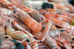 Free Shrimp On The Counter Stock Image - 35372051