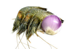 Shrimp & Onion isolated Stock Images