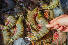 Shrimp and other seafood at a market in Thailand Stock Image