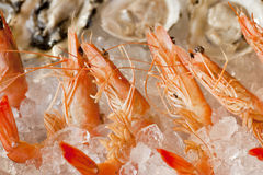 Shrimp and oysters Royalty Free Stock Images