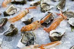 Shrimp and oysters Royalty Free Stock Image