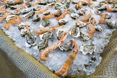 Shrimp and oysters Royalty Free Stock Photography