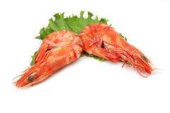 Shrimp pair royalty free stock photos