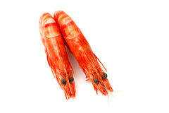 Shrimp pair 2 Stock Images