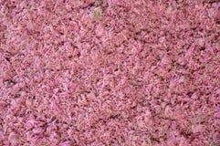Shrimp Paste Many Background Thailand royalty free stock photos
