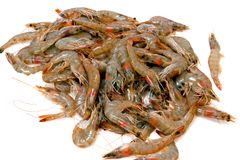 Shrimp Pile royalty free stock images