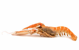 Shrimp with pincers Royalty Free Stock Images
