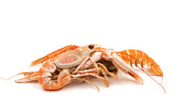 Shrimp with pincers Stock Photography