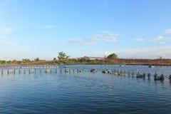 Shrimp Pond Stock Photography