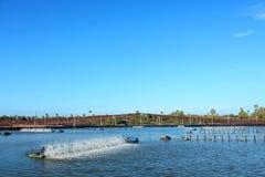 Shrimp Pond Stock Image
