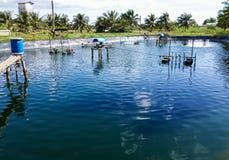 Shrimp ponds Royalty Free Stock Photos