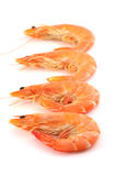 Shrimp, Prawn Royalty Free Stock Photography