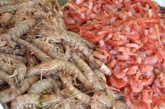 Shrimp and prawns at market. A view of piles of shrimp and prawns for sale at a market Stock Photo