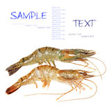 Shrimp Royalty Free Stock Photos