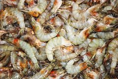 Shrimp Raw Sea food Royalty Free Stock Photo