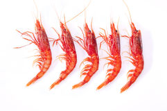 Shrimp, red and orange Royalty Free Stock Photography