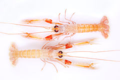 Shrimp, red and orange. On a white background Stock Image