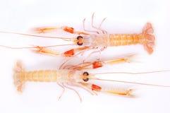 Shrimp, red and orange Stock Image