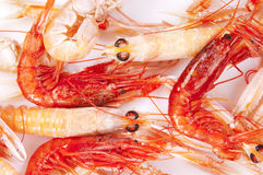Shrimp, red and orange. On a white background Royalty Free Stock Images
