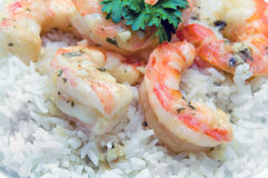 Shrimp on Rice Royalty Free Stock Images