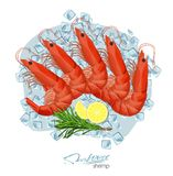 Shrimp with rosemary and lemon on ice cubes. Vector illustrationin cartoon style. Seafood product design. Inhabitant. Shrimp with rosemary and lemon on ice cubes Royalty Free Stock Images
