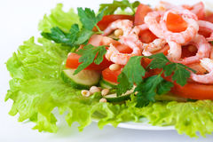 Free Shrimp Salad Royalty Free Stock Photos - 13233058