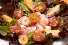Shrimp salad. Shrimp and mussel  salad with olive oil dressing Stock Photos
