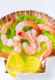 Shrimp salad Stock Photos
