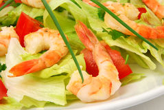 Shrimp salad. Salad with shrimps, lettuce, tomatoes and fresh herbs royalty free stock images