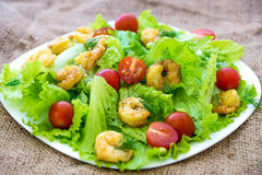 Shrimp salad with cherry tomatoes Stock Image