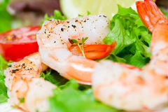 Shrimp with salad Royalty Free Stock Photography