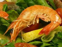 Shrimp in salad, closeup Royalty Free Stock Image
