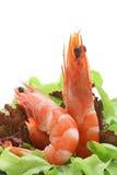 Shrimp salad cocktail Royalty Free Stock Images