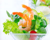 Shrimp salad with mixed greens and tomatoes Royalty Free Stock Image