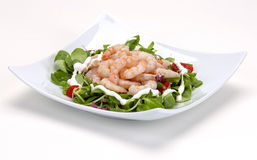 Shrimp salad on a white plate Stock Photos