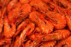 Shrimp for Sale Royalty Free Stock Images