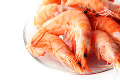 Shrimp sea food Stock Photos