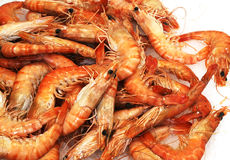Shrimp sea food Stock Photo