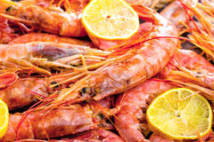 Shrimp Sea Food With Lemon Rosemary And Garlic Stock Photography