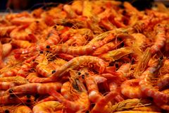 Shrimp at a Seafood Stall in the Market. An image of Shrimp at a Seafood Stall in a market at the island of Tenerife Royalty Free Stock Photo