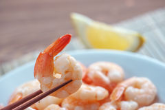 Shrimp Stock Photography