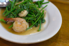 A Shrimp on the Stir-Fried. A Shrimp on the Stir-Fried Chinese Water Cress Royalty Free Stock Photography