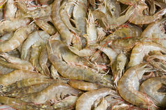 Shrimp stock Royalty Free Stock Image