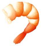 Shrimp tail on white royalty free illustration
