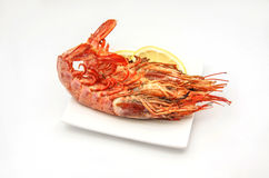 Shrimp Royalty Free Stock Photo